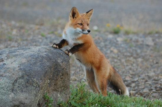 foxpro programming